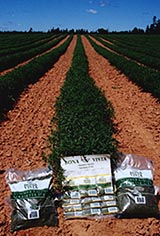 Bona Vista Summer Savory packages in the field